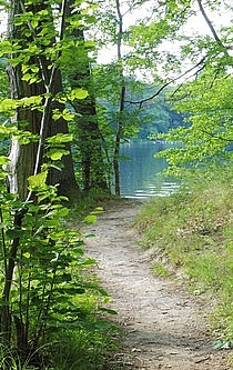 Waldweg, der zum See führt.