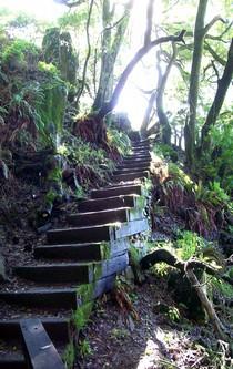 Eine Treppe führt aus einer Waldschlucht ins Licht.