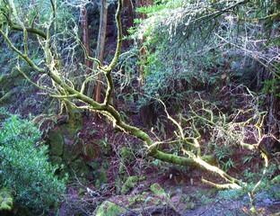 Undurchdringliches Unterholz im Wald.