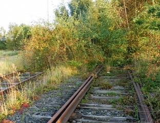 Ein wildes Gebüsch überwuchert ein stillgelegtes Gleis.
