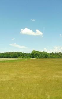 Kleine, weiße Wolke am blauen Himmel über einer Sommerwiese.
